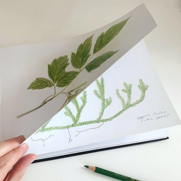 Gnezdece - Herbarium